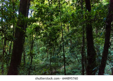 nature lighting and shadow in forest.