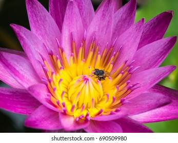 nature of the lotus