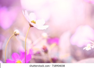 nature macro flowers. Vintage toned with filter photo with pastel soft warm pink colors