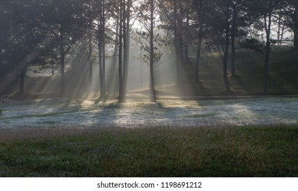 Nature with magic sunrays, sunshine, light and green grass, meadow. Photo use in idea design for golf, fresh environment