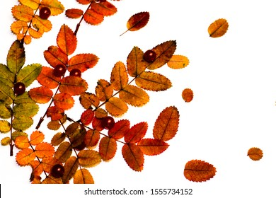 Nature materials isolated on white background with autumn leaves and different artificial pearls