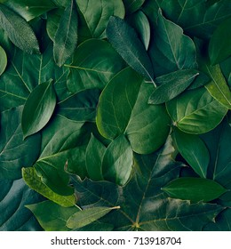 Nature Minimal Concept - Green Leaves Background. Flat Lay