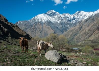 Nature of Mtskheta-Mtianeti region, Georgia