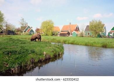 Nature at Netherlands