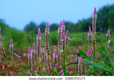 Nature Offers Beautiful Things Stock Photo Edit Now 1088390573