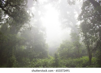 nature on a foggy day