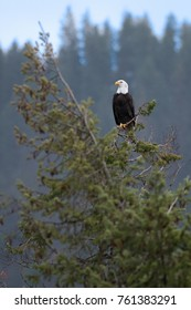 Nature on Higgen's Point, Lake Coeur Coeur d'Alene Idaho, USA