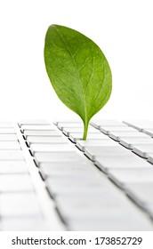 Nature online. Leaf on a computer keyboard