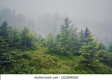 nature panorama green forest mountain fog cloud travel tourism environment