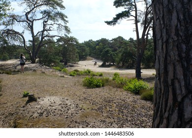 In a nature park with dunes near a town called Amersfoort in the Netherlands