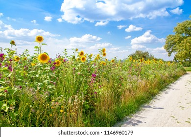 Nature path on a field with colorful summer flowers