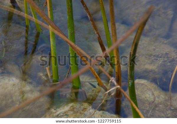 foto de Nature Paysage Automne Montagne Jura Stock Photo (Edit Now) 1227759115