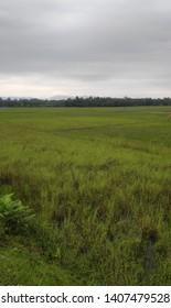 Nature photo and walpaper ,background