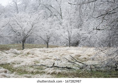 A nature photograph of of the results of an ice storm in rural Tennessee, USA.  There are limbs down in the foreground, tall grass and Dogwood trees white with ice from the freezing rain.