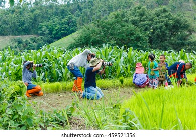 """Nature Photographer-Tourist takes a snapshot of the The child helps parents farm at  """"Pa Pong Piang"""" District Mae chaem of Chiang Mai Province Country of Thailand July 23, 2016"""