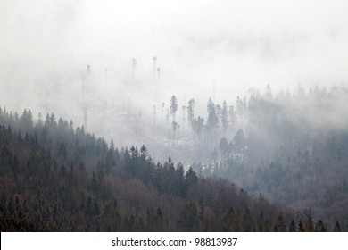 Nature photography of a beautiful fog in Beskidy mountains