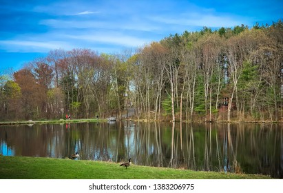 Nature photography, dean park and the lake.