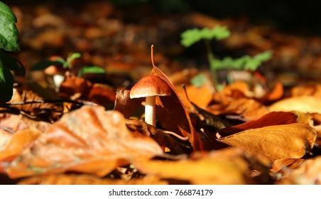 Nature Photography - Macro Photography