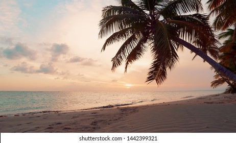 Nature pink clouds and blue sky reflected in the water of Caribbean sea. Palm sunset over the sea. Pink sunset over the sea. Beautiful beach with palm trees and sand. The best sunsets in the world.