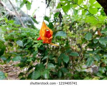 Nature plant florest