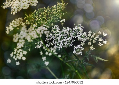 Nature Plant Summer