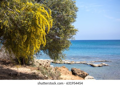 Nature, plants on the quay, hanging branches of trees, Europe, the Mediterranean Sea, a sunny day, the shore