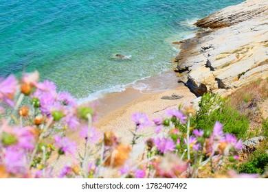 Nature of Porquerolles island, France