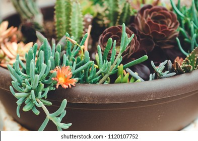 nature poster. suculents and cactuses blooming in the pot