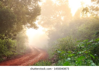 nature in the province of Misiones, Argentine