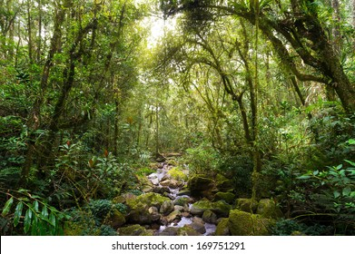 Nature rain forest with morning sunlight at Kinabalu Park,Malaysia,Asia