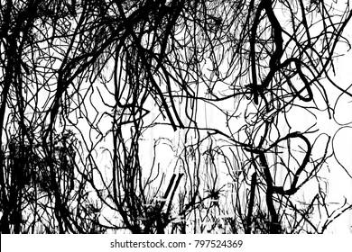 Nature reflection at Swan river - 2