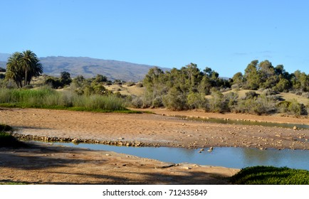 nature reserve charco of maspalomas