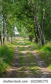 Nature reserve kampina, boxtel, noord brabant, netherlands