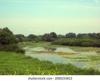 Nature Reserve Kil van Hurwenen near Zaltbommel