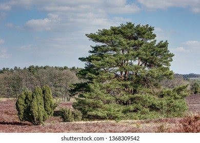 The nature reserve Lueneburg Heath is a landscape with many faces and has a very special charm in the spring. In the light of the sun the newly awakened heath shines again in all colors.