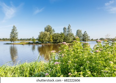 Nature reserve for water birds called Willeskop at Oudewater in the Dutch province of South Holland with island overgrown with trees and shrubs against clear blue sky