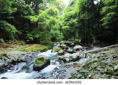 Nature with river and forest