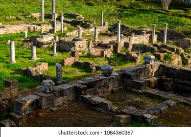 Nature and ruins of Hippo Regius, a Phoenician, Berber and Roman city, Annaba Province, Algeria.