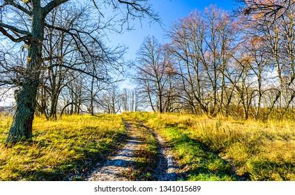 Nature rural road landscape. Rural forest road view. Rural road in countryside. Country rural road view