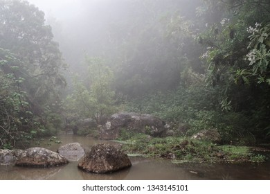 Nature scene of a fog in a forest. Taken on the way along Levada do Risco in Lombo do Doutor on Madeira island