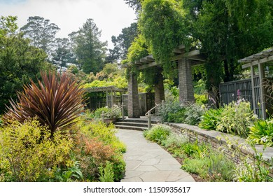 Nature scene in the San Francisco Botanical Garden, California