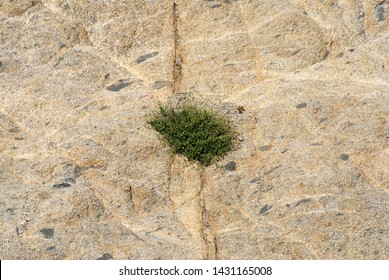 Nature scene of Small trees along the fissures of the mountains surface texture background