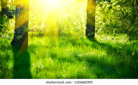 Nature scene. Summer Park. Beautiful field with green fresh grass and trees, Sun Rays. Summertime background