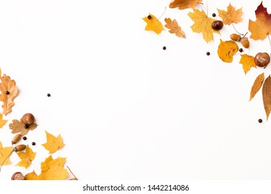 nature, season and botany concept - different dry fallen autumn leaves, chestnuts, acorns and aronia berries on white background