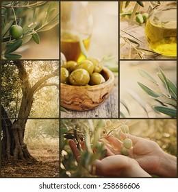 Nature series. Collage of olive orchard in harvest. Ripe olives, olive oil and olive harvest