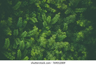 nature shot of green leafs taken from above