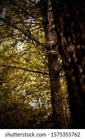 Nature shots taken by Sabian Buxton