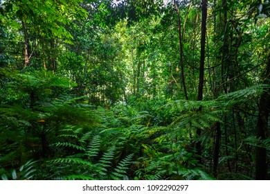 Nature of the Sinharaja Forest Reserve,  a national park in Sri Lanka. UNESCO World Heritage