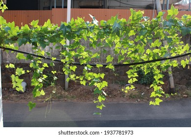 nature spread over the wall with an intention to grow in spite of obstructions and troubles