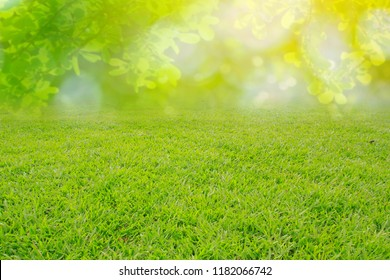 nature spring grass background texture.